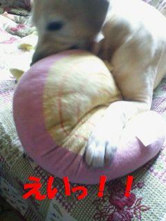 110410_blogubu3.jpg