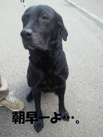 110414_blogjun2.jpg