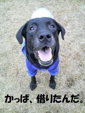 110416_blogjun1.jpg