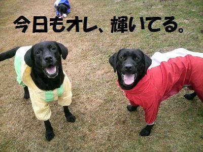 110417_blogjun.jpg