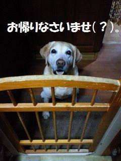 110417_blogubu1.jpg