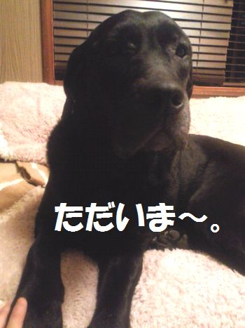 110421_blogjun.jpg