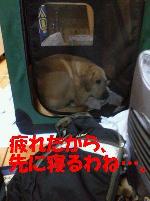 110430_nisekoubu.jpg