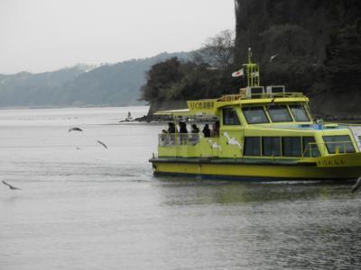 伊根湾観光船とカモメ