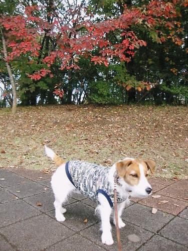 2011長岡公園859