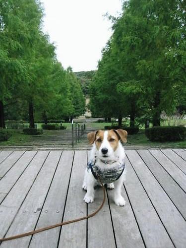 2011長岡公園861