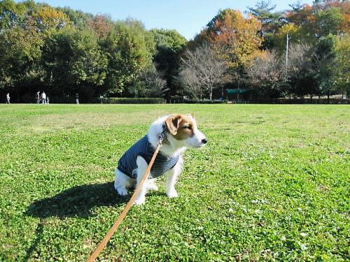 2011長岡公園889