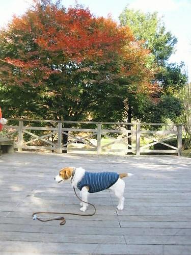 2011長岡公園894
