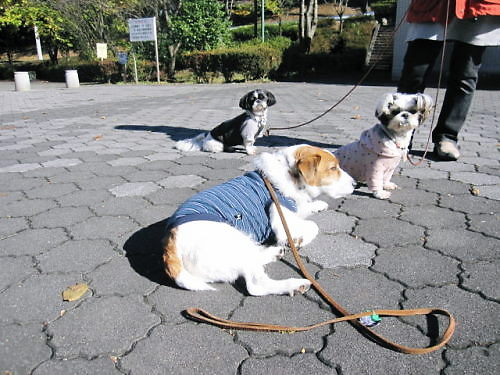 2011長岡公園895