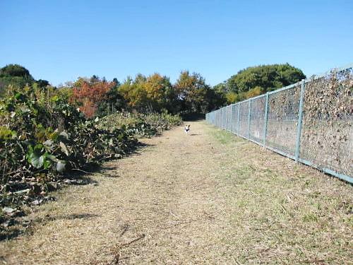 2011長岡公園896