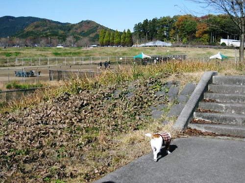 2011おでかけ602