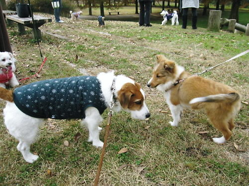2011長岡公園906