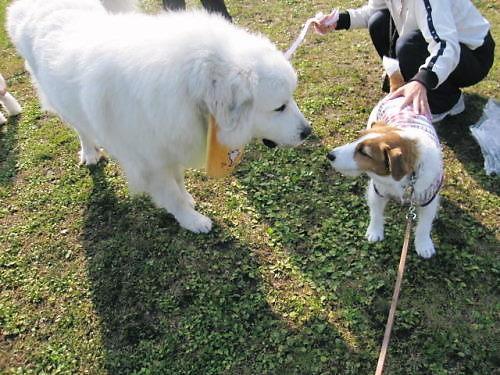 2011長岡公園909