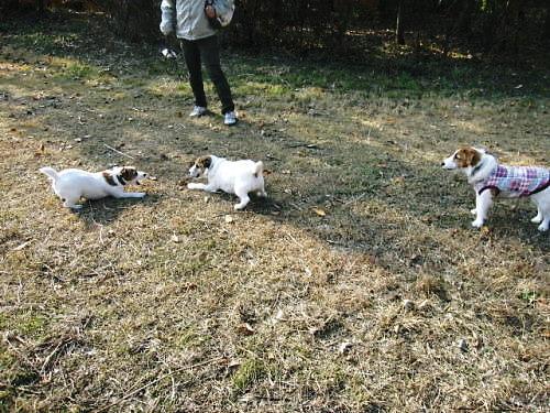2011長岡公園913