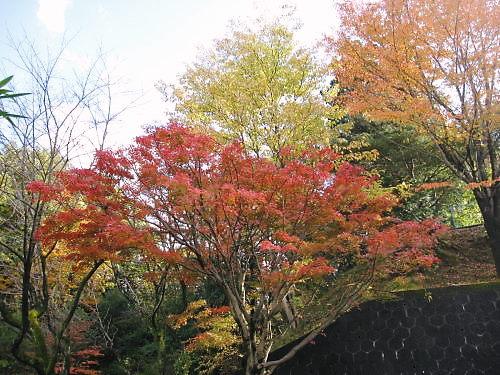 2011草木花038