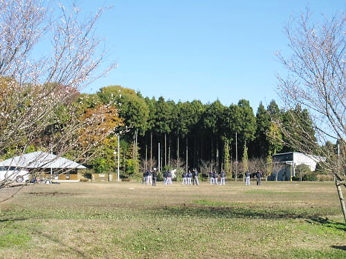 2011草木花045