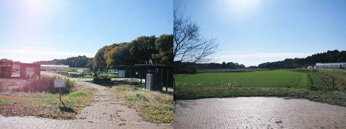 2011草木花044