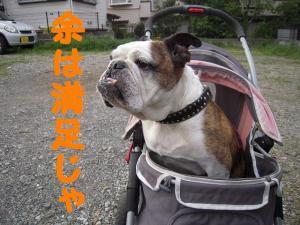 04日 お散歩・食べ放題 (27)