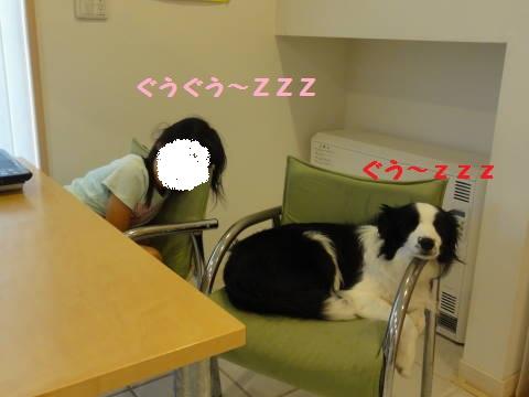 DSC06674.jpg