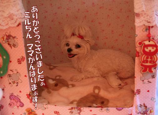 t-20071204_014.jpg