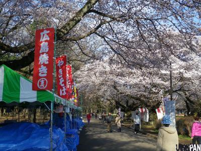 2012小金井公園桜2