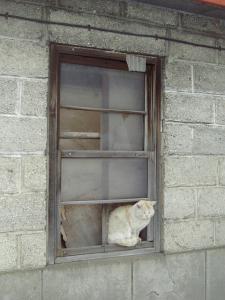 窓際タドコロ②