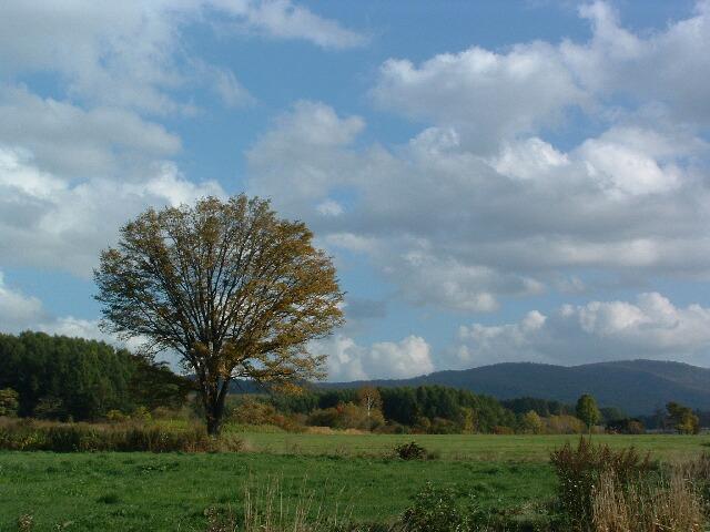 秋の楡の木