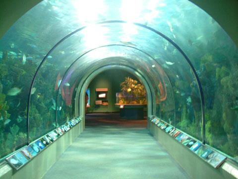 オーデュボン・アメリカ水族館