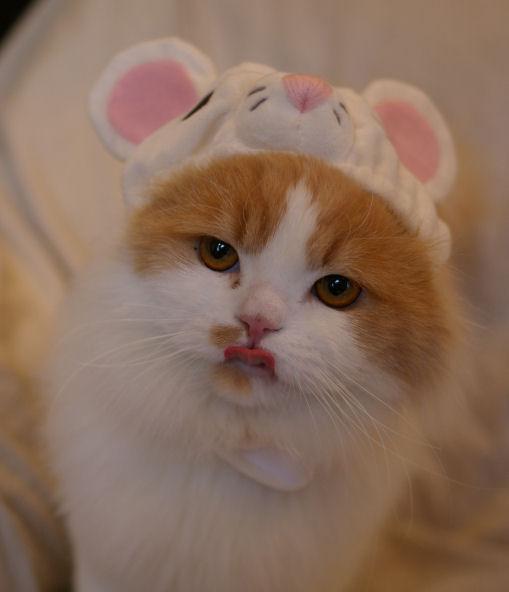 IMGP7279-猫