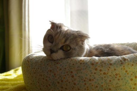 IMGP7856ー猫