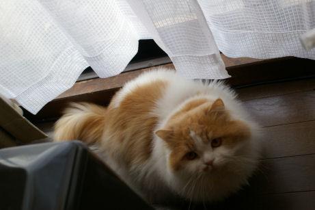 IMGP7878ー猫