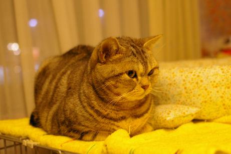 IMGP7903ー猫