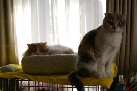 IMGP7908ー猫