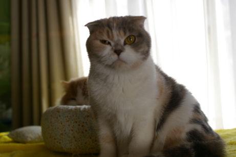 IMGP7914ー猫