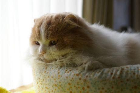 IMGP7915ー猫