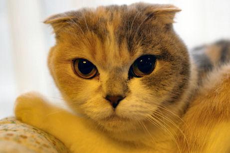 IMGP7939ー猫