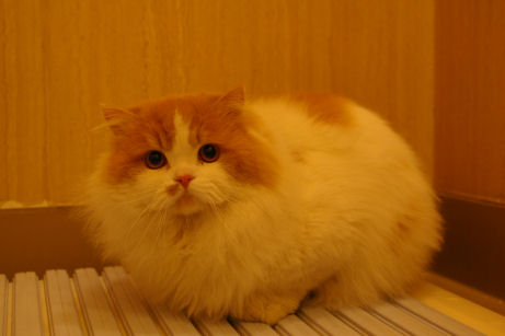 IMGP7959-猫