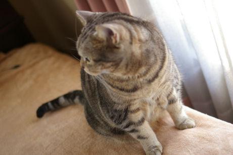 IMGP8034ー猫