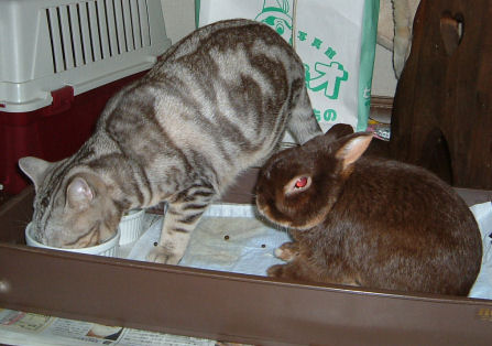 画像 デジカメ 024ー猫