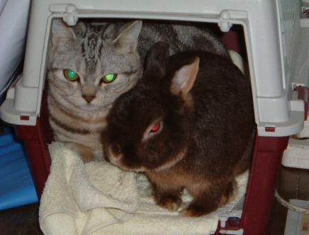 画像 デジカメ 031ー猫