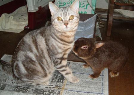 画像 デジカメ 039―猫