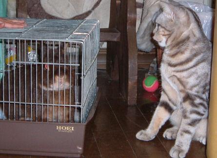 画像 デジカメ 002ー猫