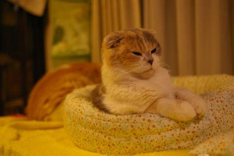 IMGP8117ー猫