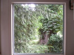 Tさんちの窓から