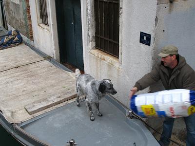 ヴェネツィアの犬