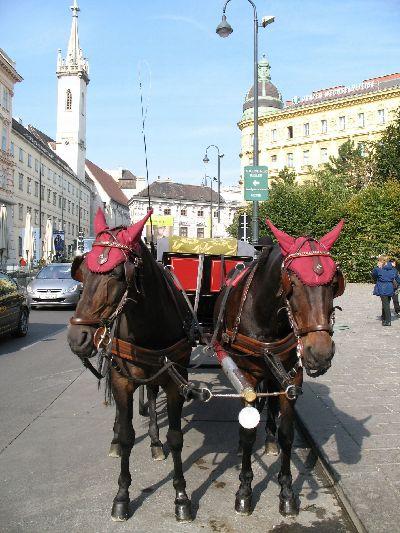 ウィーンの馬