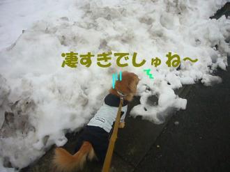 雪に驚き?