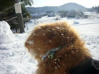 雪まみれ②