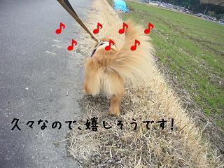 尻尾フリフリ