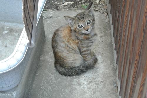ノラ仔猫 (2)